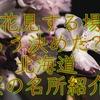 北海道の桜は今が見頃!おすすめお花見スポット13選