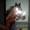 競馬トレカの王様 まねき馬シリーズ