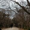 糺の森と下賀茂神社の光琳の梅・縁結びの神「相生社」と女性の守護神「河合神社」