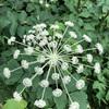 小石川植物園31