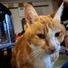 御長寿猫ちゃん!17歳の猫の暮らし