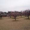 梅まつり&西大寺