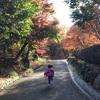 4歳娘と行く箱根旅行【小田原わんぱくらんど】が超楽しめる