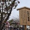 1月8日・水曜日 【うんちくま27:造幣局の桜16】