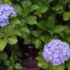 ふれあい小路・色な場所の思い出・紫8…