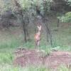 鹿のゆっくり対面