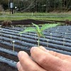 麻農家体験(1)