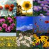 Twitter、アメブロ、Instagram、Facebookに作家「旬夏」さんの詩をご紹介しました。