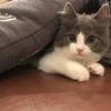 【48/100記事】池袋「モカ」という猫カフェ天国