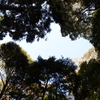 若草山と原生林/頂上への散策路が原始林で覆われている。木漏れ日が揺れている。古代を歩くよう。