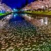 鶴岡公園の夜桜2019,4月21日
