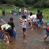 川の生きもの探検 in 羽地ダム鯉のぼり祭り 2016