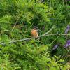 🦜野鳥の回【174】観察記録はzoopickerが便利。ライフリストも簡単管理