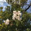 春の縁切り絵馬大会