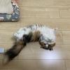 Cats(まこところ)
