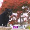 「岩合光明の世界ネコ歩き 讃岐・香川」(2021)