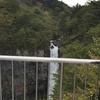 【栃木県日光市】迫力満点!!日光 華厳の滝