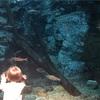 【岐阜】アクアトトぎふは赤ちゃんにもおすすめ水族館!バーベキューや水遊びもできる夏休みおでかけ情報