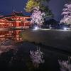4/5(木)平等院 春の夜間特別拝観に行ってきました