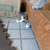 【日本家屋】床下の猫