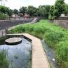 白子川と新川を歩く その1 新河岸川合流点から白子川を遡って上流端まで