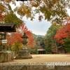 【日本の城/大阪】お得きっぷで行く!金剛山ハイキングと千早城趾