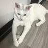 【うーちゃんを助けたいにゃ】 にゃんねこ25匹の猫生活を紹介するにゃ 5