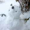 雪と猫(*´ω`*)