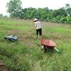 ベトナムで農業を初めて約2ヶ月たっての近況と課題感