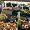 食虫植物の鉢 & ポット、どうしてる?🤔