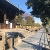 2021年1月・東寺の弘法市と梅小路公園の様子は…