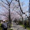 春風と桜の開花ウォーク その2