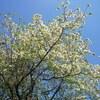 息子とお散歩中の癒しの出会い~春の花~