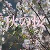 九州では桜が満開です。青さんの長崎珍景