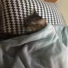 子猫 トイレで寝る⁈
