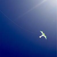 オグラス上空にカイト飛ぶ、滋賀県 蛇谷ヶ峰。
