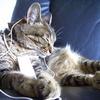 猫は音楽が大好きだった 猫に特化した音の発明