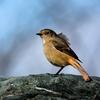 今日の鳥さん。