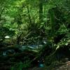 【自然が好き】自然で過ごすことが好き、人が自然を求めてしまう理由