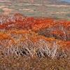 ◆'20/10/04   紅葉&黄葉の月山へ⑦