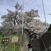 甚大な神代桜~長野市芋井