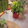 「マンションの休日を楽しむ!バルコニーのプチ菜園」