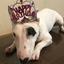 【子犬の躾|38】1歳の誕生日と反抗期【いやはや驚いた】