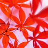 紅葉の撮り方をまとめてみました。【基本設定編】