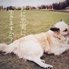 マヤ暦K50『自分の軸をはっきりさせよう』~白い犬~