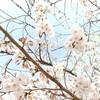 春の恵那散歩【桜の恵那峡】