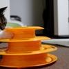 【猫・おもちゃ】くるくるタワー良い感じ