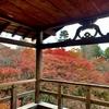 【京都】紅葉の人気スポット 東福寺へ|方丈庭園と通天橋〈追記あり〉