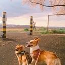 乙ゲーと犬と、時々恋愛論。