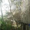 4月3日:3月の庭の写真2点